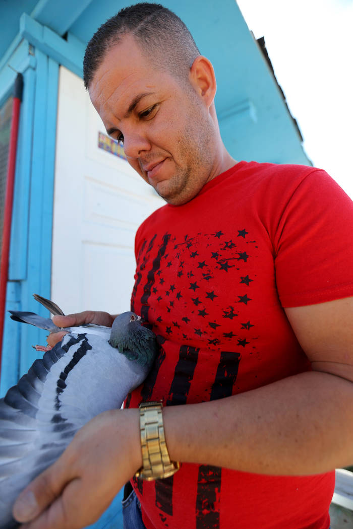 Rasiel Martinez checks one of his pigeons that just arrived at his Las Vegas home from Victorville, Calif. on the Cher Ami leg of the Racing Pigeon Cross Country Relay Thursday, Oct. 4, 2018. The ...