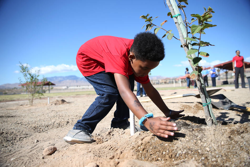 Volunteers including third-grade-student Kameron Stinson, 8, helps plant a tree at Forbuss Elementary School in Las Vegas as part of United Way of Southern Nevada's third annual Day of Caring, Fri ...