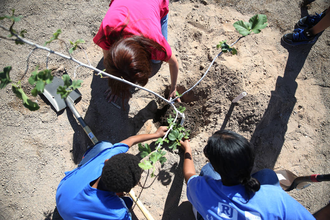 Volunteers help plant a tree at Forbuss Elementary School in Las Vegas as part of United Way of Southern Nevada's third annual Day of Caring, Friday, Oct. 5, 2018. Erik Verduzco Las Vegas Review-J ...