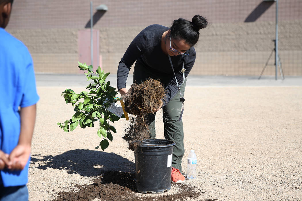 Volunteer Jessica Melendez helps plant a tree at Forbuss Elementary School in Las Vegas as part of United Way of Southern Nevada's third annual Day of Caring, Friday, Oct. 5, 2018. Erik Verduzco L ...