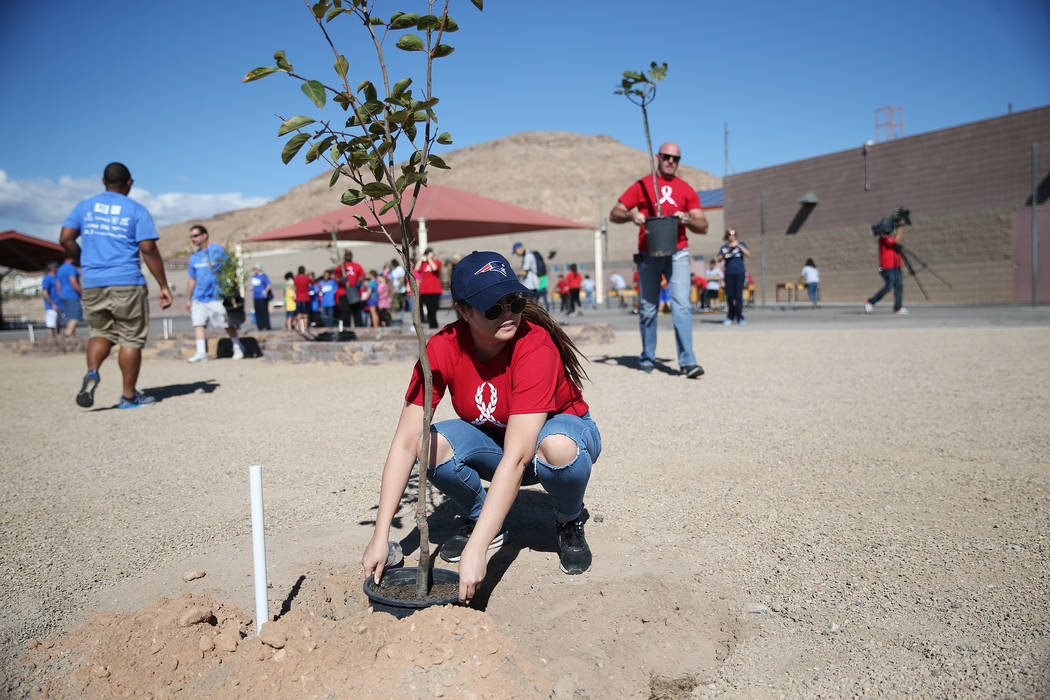 Volunteer Sarah Denkler helps plant a tree at Forbuss Elementary School in Las Vegas as part of United Way of Southern Nevada's third annual Day of Caring, Friday, Oct. 5, 2018. Erik Verduzco Las ...