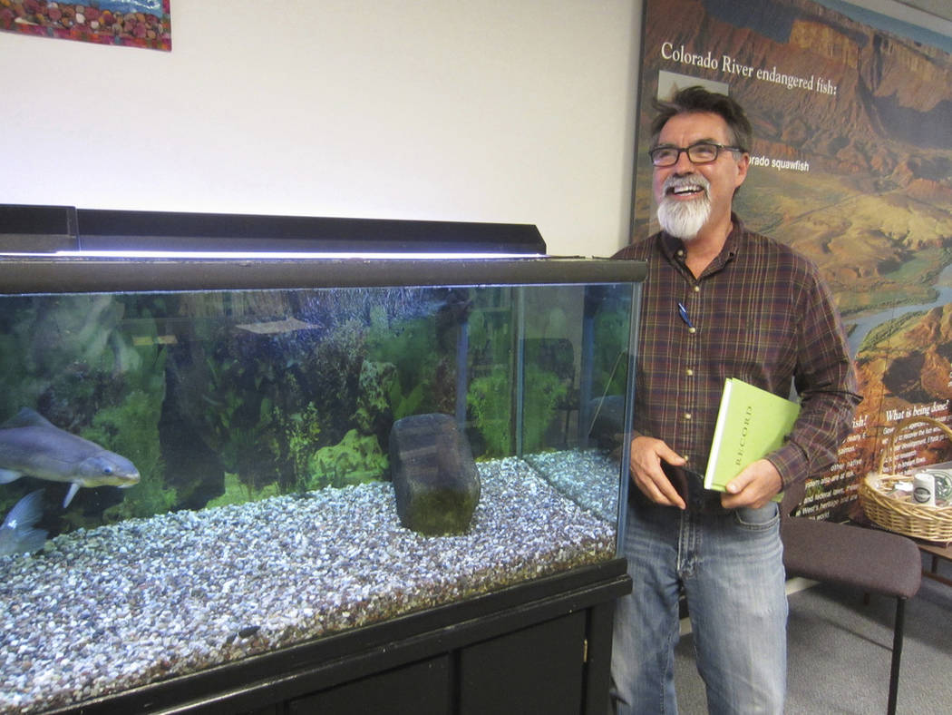Tom Chart, director of the Upper Colorado River Endangered Fish Recovery Program, checks a tank containing a razorback sucker fish on display at the U.S. Fish and Wildlife Service office in Lakewo ...