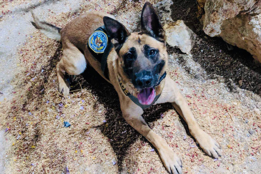 The Henderson Police Department on Wednesday announced the death of one of its canine cops. (Henderson Police Department/Twitter)