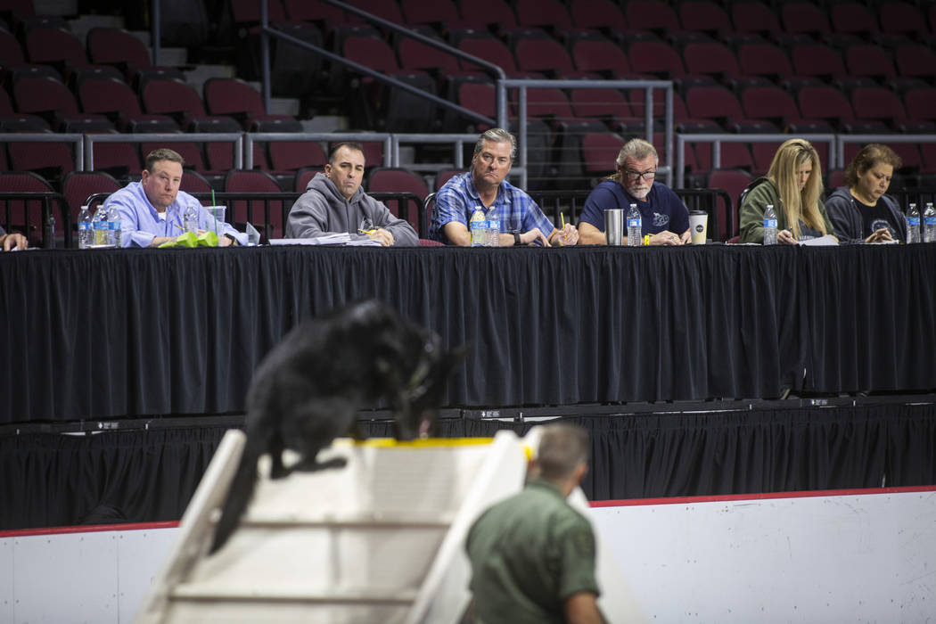 Judges watch as Dustin Adams of the Utah Department of Corrections leads the K-9 Legion through various obstacles during the agility portion of the Las Vegas Metro K-9 Trials at the Orleans Arena ...
