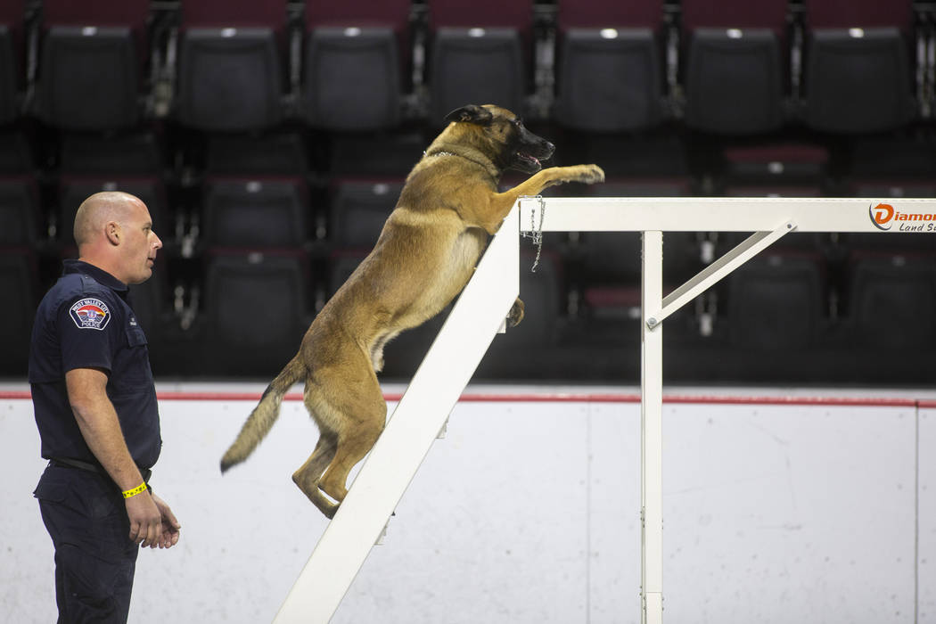 Trevor Hrynyk of Ventura Police Department in California leads the K-9 Jag through an obstacle during the agility portion of the Las Vegas Metro K-9 Trials at the Orleans Arena in Las Vegas, Sunda ...