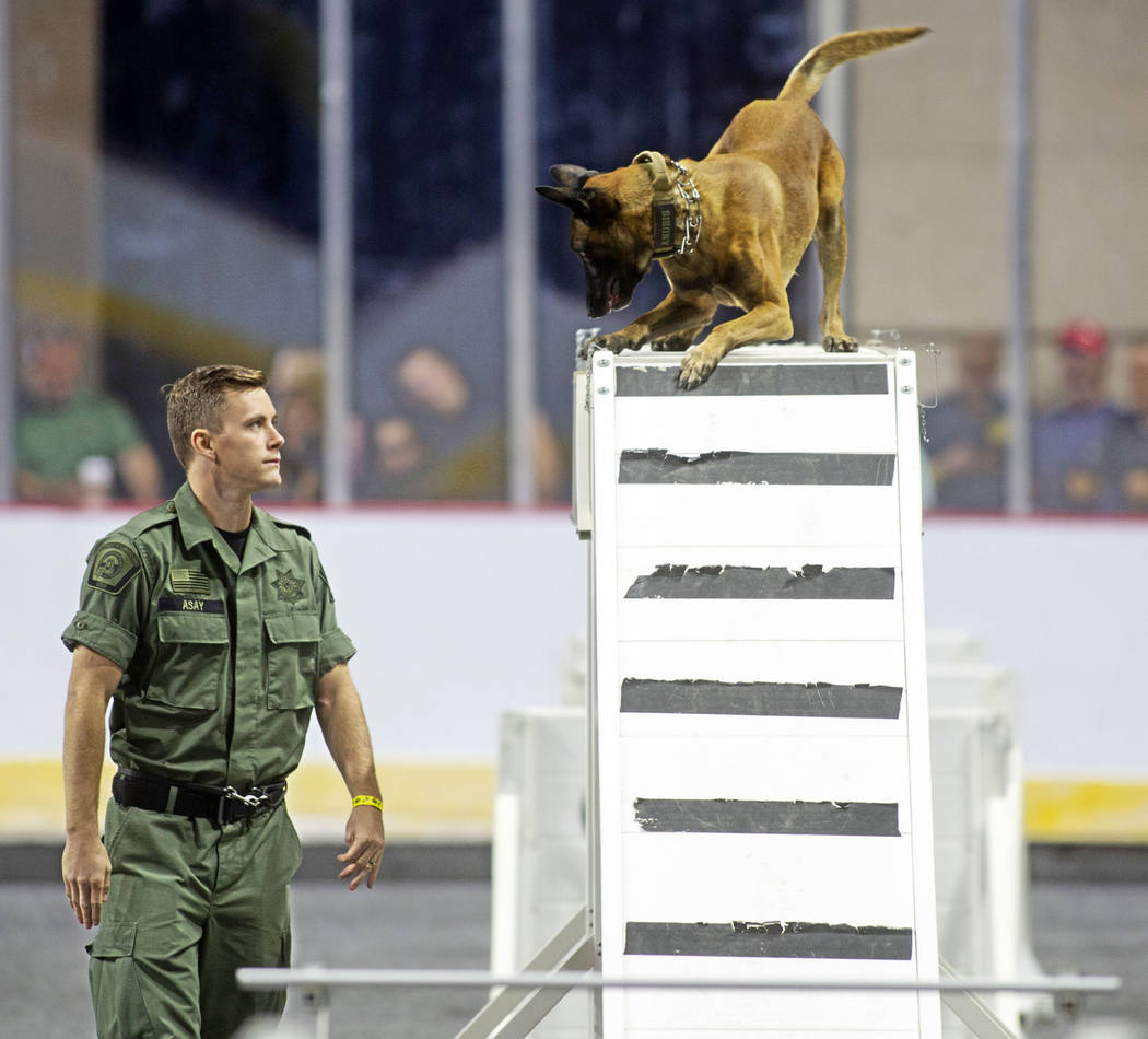 Brian Asay of the Utah Department of Corrections leads the K-9 Anubis through an obstacle during the agility portion of the Las Vegas Metro K-9 Trials at the Orleans Arena in Las Vegas, Sunday, Oc ...