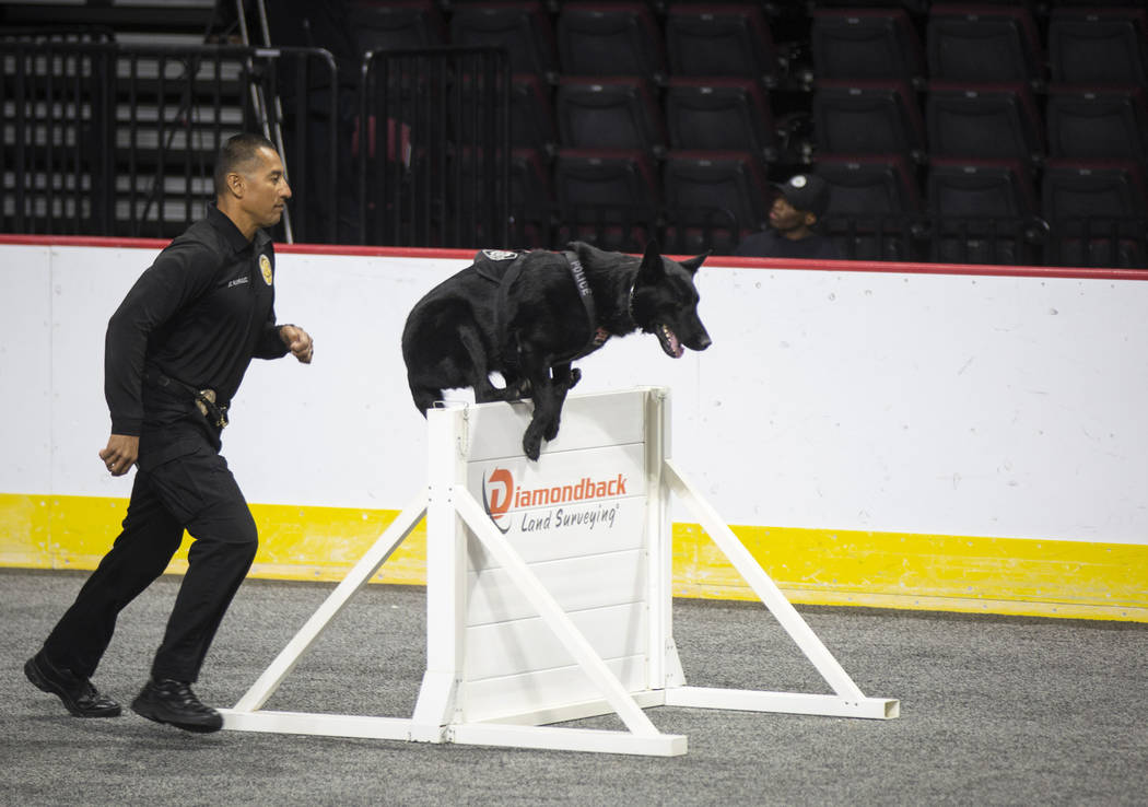 Keith Therrien of Ventura Police Department in California leads the K-9 Yoschi through an obstacle during the agility portion of the Las Vegas Metro K-9 Trials at the Orleans Arena in Las Vegas, S ...