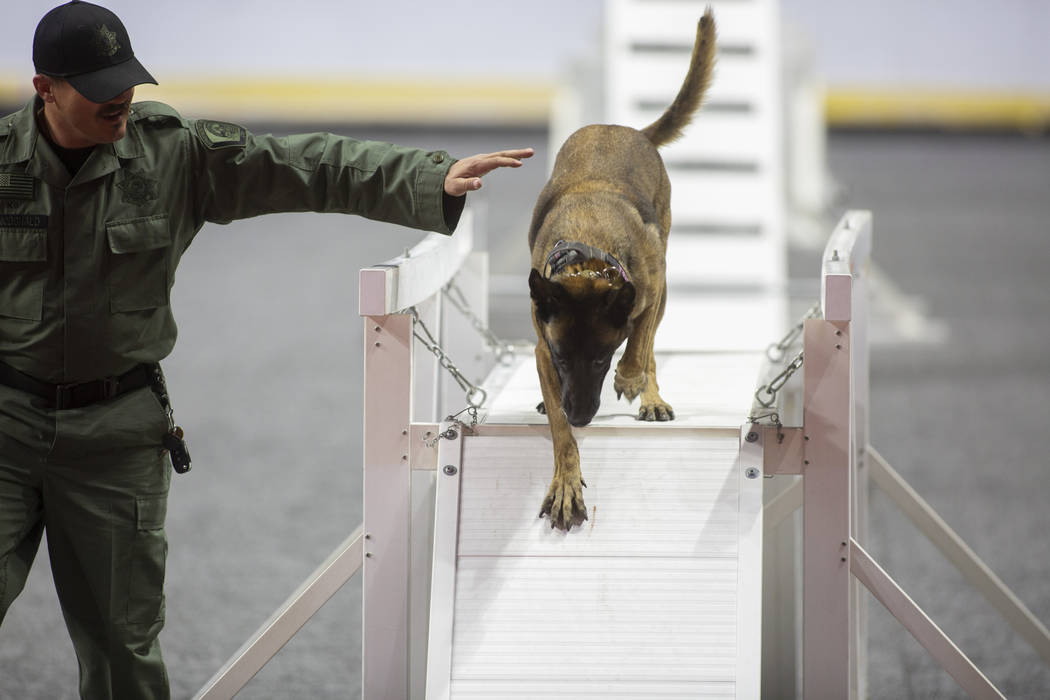 Brady McDonald of the Utah Department of Corrections leads the K-9 Astra through an obstacle during the agility portion of the Las Vegas Metro K-9 Trials at the Orleans Arena in Las Vegas, Sunday, ...