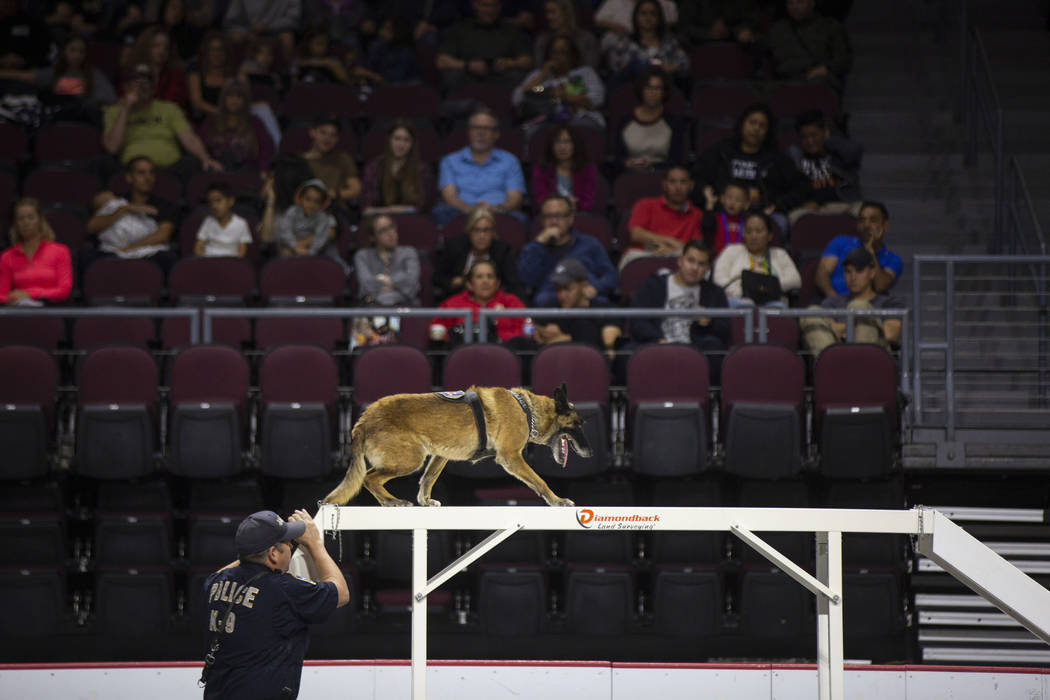 Jake Palmer of West Valley Police Department in Utah guides the K-9 Ranger through an obstacle during the agility portion of the Las Vegas Metro K-9 Trials at the Orleans Arena in Las Vegas, Sunda ...
