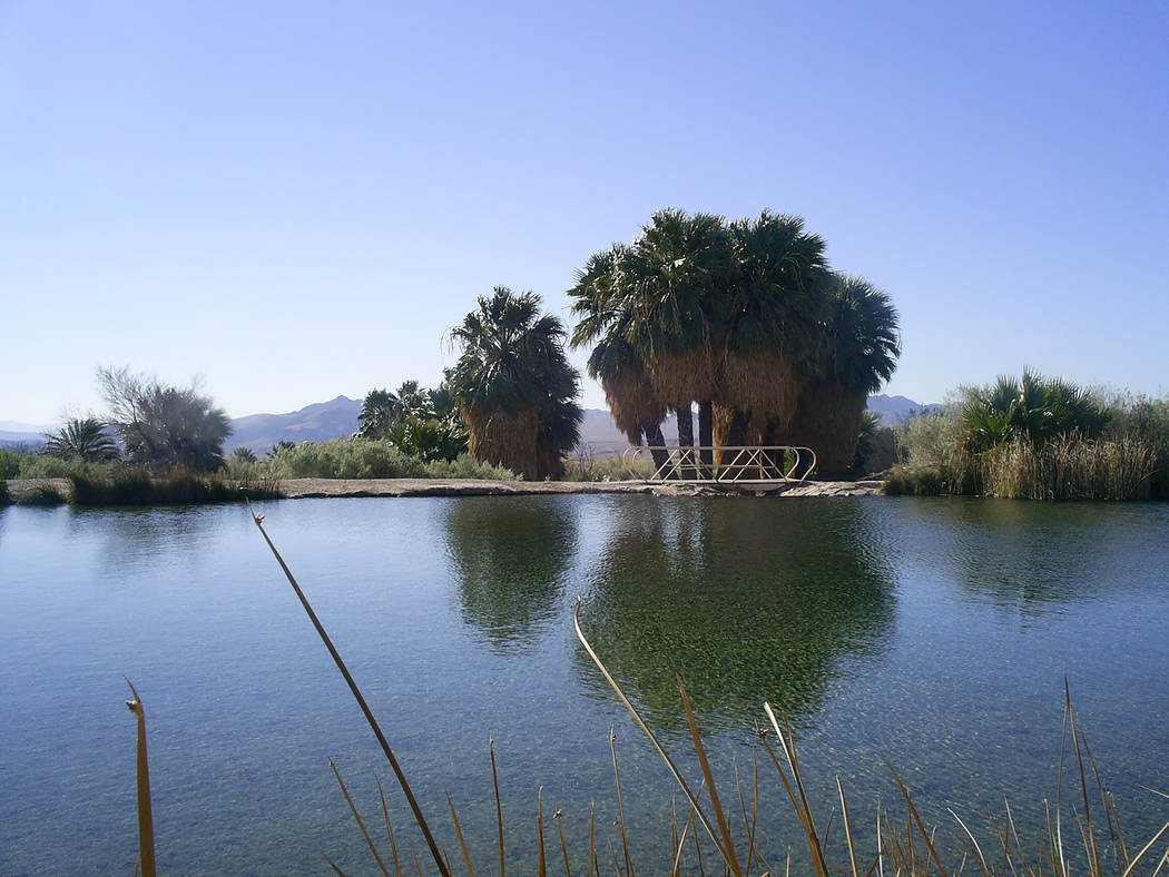 Rogers Spring can be found along Northshore Road in Lake Mead NRA. (Deborah Wall/Review-Journal)