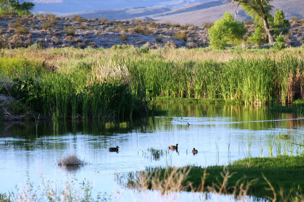 The Pahranagat National Wildlife Refuge is a two-hour drive from Las Vegas and provides camping, hunting and bird viewing opportunities. (U.S. Fish & Wildlife Service)