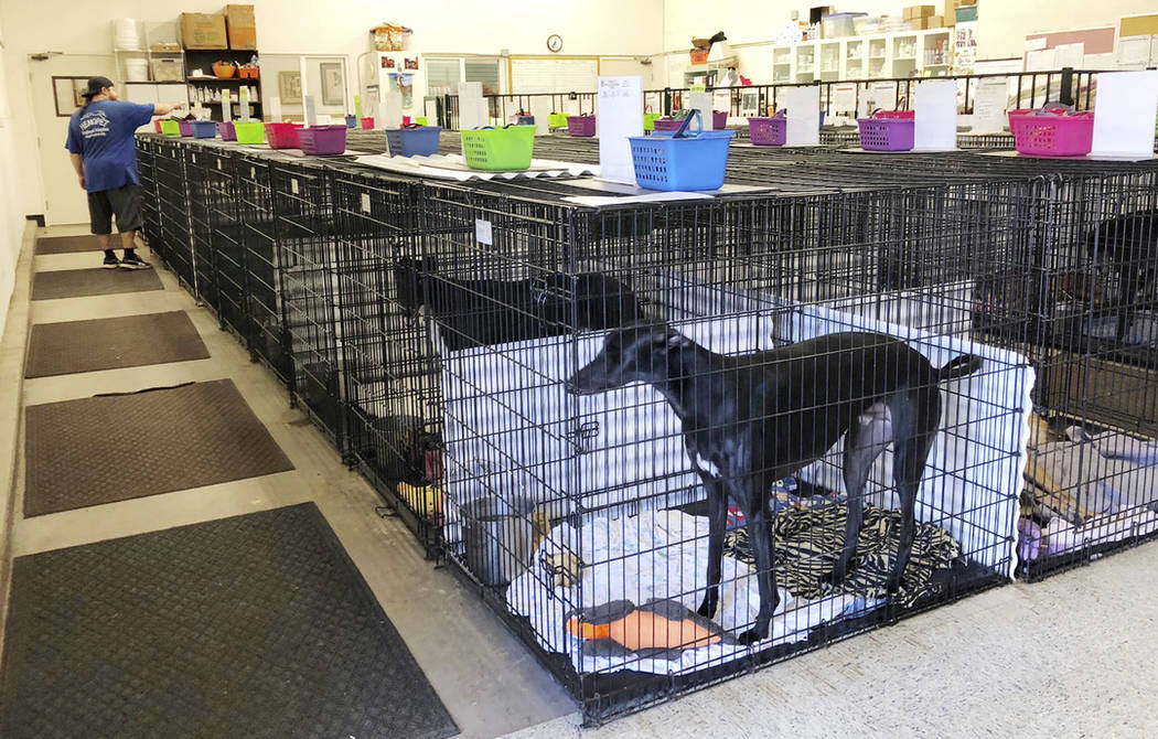 A greyhound is seen in a crate at Hemopet in Garden Grove, Calif., on Oct. 10. (AP Photo/Amy Taxin)