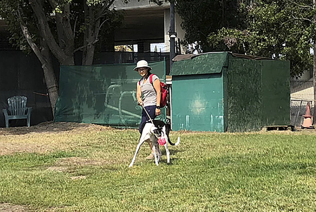An employee exercises a greyhound at an outdoor recreation area at Hemopet canine blood bank in Garden Grove, Calif., on Oct. 10. (AP Photo/Amy Taxin)