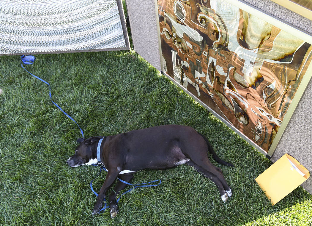 A dog relaxes next to artwork during the 23rd annual Summerlin Festival of Arts at Downtown Summerlin in Las Vegas on Saturday, Oct. 13, 2018. Chase Stevens Las Vegas Review-Journal @csstevensphoto