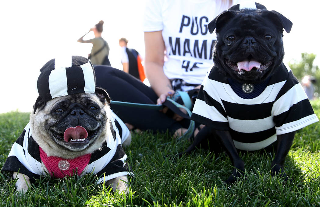 Bentley, left, and Mercedes Benz, dogs belong to Courtney Lund of Las Vegas, attend the Family, Fur & Fun Festival at Exploration Park in Las Vegas, Saturday, Oct. 13, 2018. Erik Verduzco Las ...