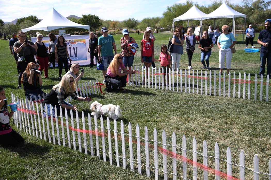 People attend the Family, Fur & Fun Festival at Exploration Park in Las Vegas, Saturday, Oct. 13, 2018. Erik Verduzco Las Vegas Review-Journal @Erik_Verduzco
