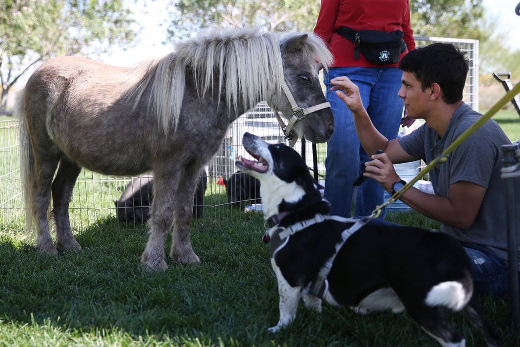 Tyler Kinney, 17 of Las Vegas, with Tony the miniature horse, at the Family, Fur & Fun Festival at Exploration Park in Las Vegas, Saturday, Oct. 13, 2018. Erik Verduzco Las Vegas Review-Journa ...