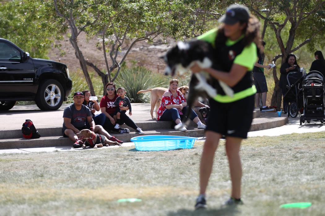 People watch dogs performs during the Family, Fur & Fun Festival at Exploration Park in Las Vegas, Saturday, Oct. 13, 2018. Erik Verduzco Las Vegas Review-Journal @Erik_Verduzco