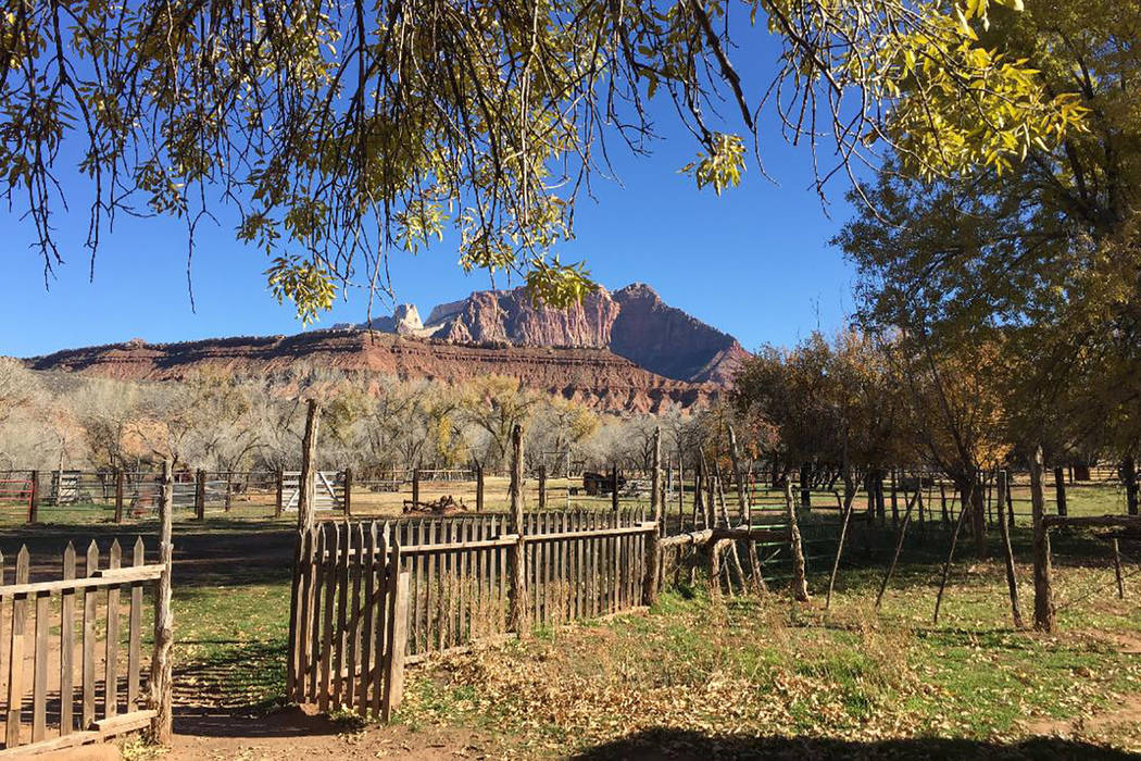 Looking north from the historic Grafton townsite toward Zion's Mount Kinesava. (Deborah Wall/Las Vegas Review-Journal)