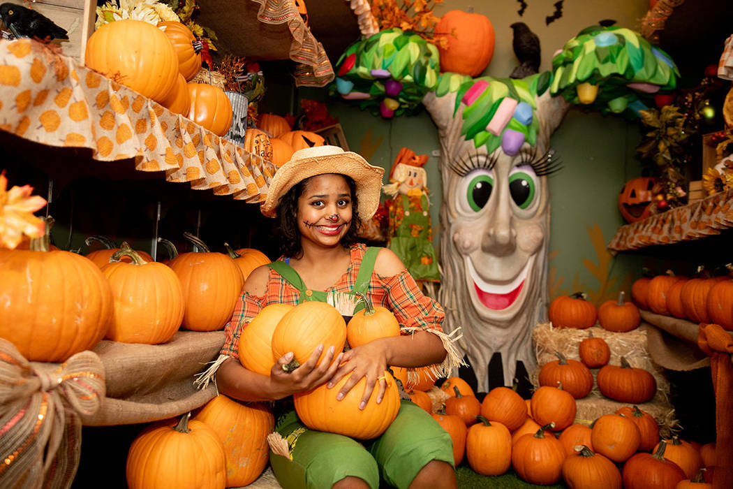Gabriella De Leon is in the pumpkin patch at Operation Halloween. (Tonya Harvey Real Estate Millions)