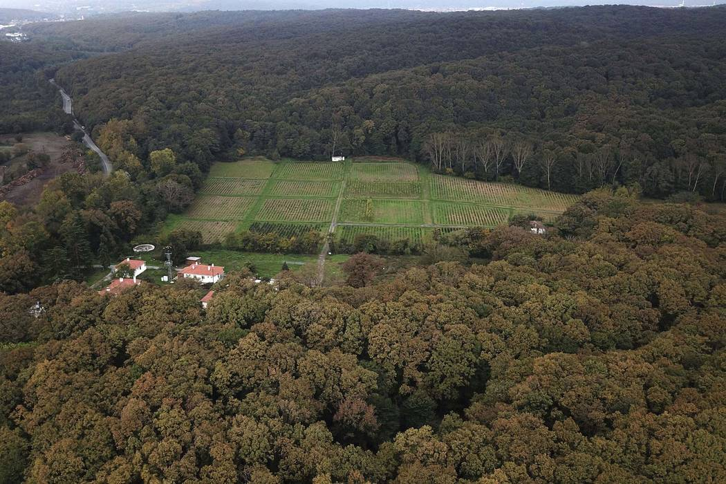 An aerial view of the Belgrade Forest in Istanbul, Friday, Oct. 19, 2018. A Turkish official says investigators are assessing the possibility whether the remains of missing Saudi journalist Jamal ...