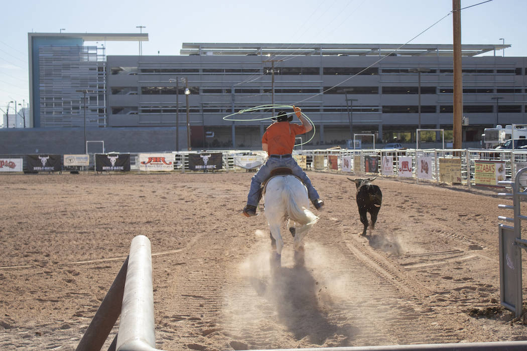 A horse is seen during a roping event at the Plaza hotel-casino's equestrian center in 2017. (Plaza hotel-casino)