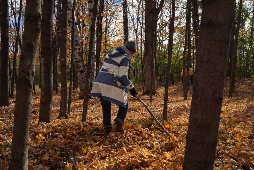 A volunteer uses uses a stick to brush away dense leaf cover a near Barron, Wis., Tuesday, Oct. 23, 2018, while searching for 13-year-old Jayme Closs, who was discovered missing Oct. 15 after he ...