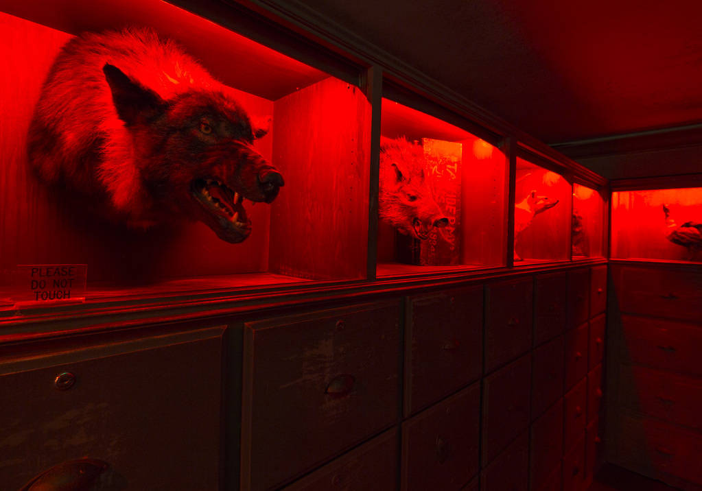 A hallway adorned with taxidermied animals at Zak Bagans' The Haunted Museum located at 600 E. Charleston Blvd. in downtown Las Vegas on Monday, Oct. 22, 2018. Richard Brian Las Vegas Review-Journ ...