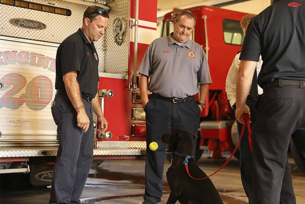 Firefighter Cody Jenne plays ball with an eager two-year-old lab mix named Juice on Thursday, Oct. 11, 2018, while several other firefighters watch. Juice and Fire Station 20 are among the first p ...