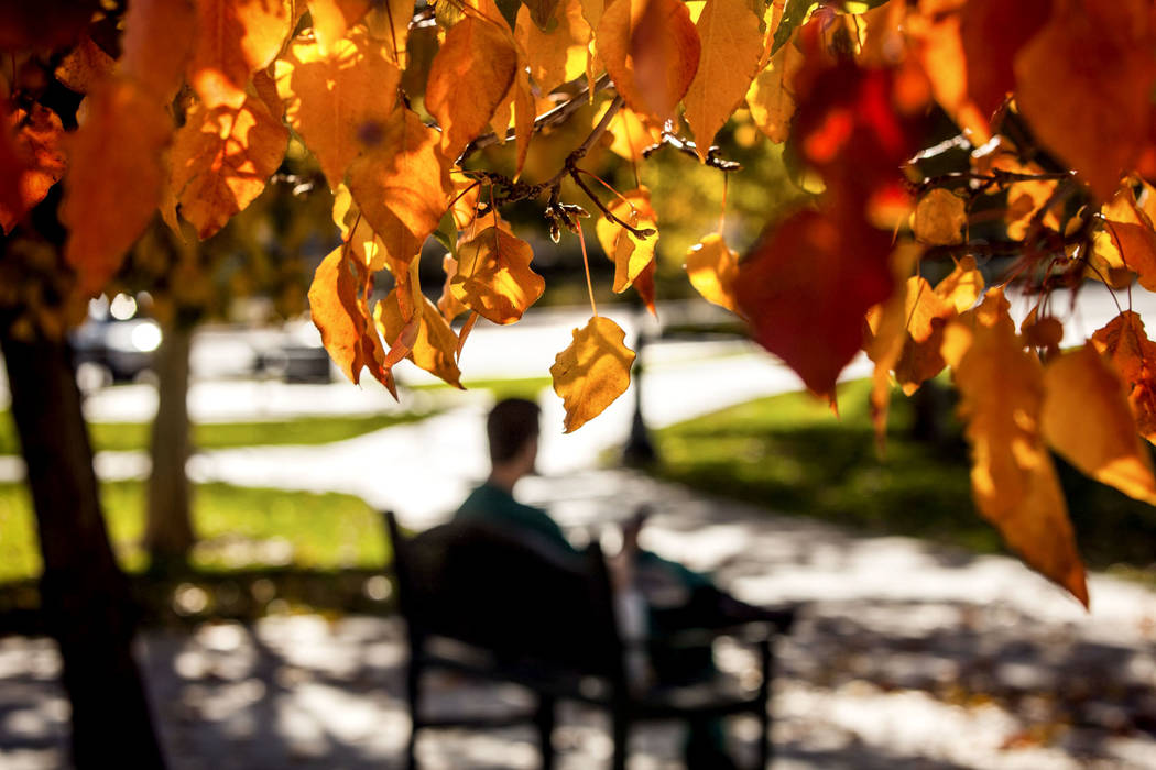 A man sits in the Gardens Park in Summerlin on Friday, Nov. 15, 2013. (Jeff Scheid/Las Vegas Review-Journal)
