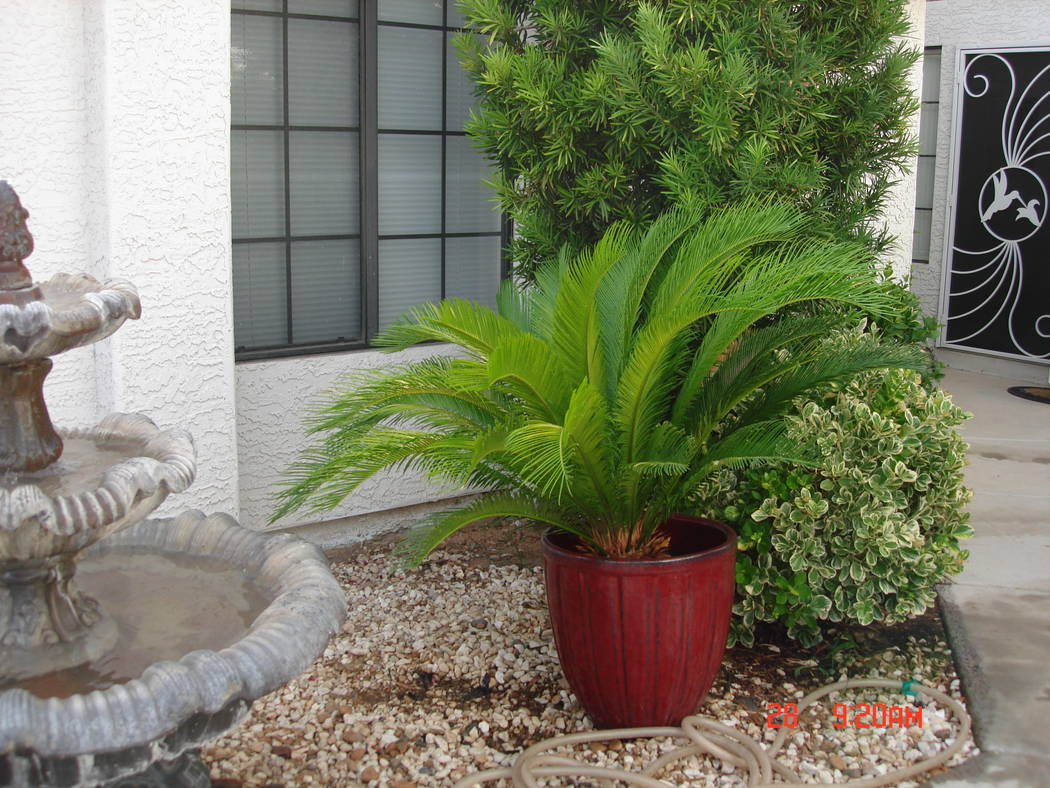 Eastern or morning exposure to the sun is best for container plants. (Bob Morris)