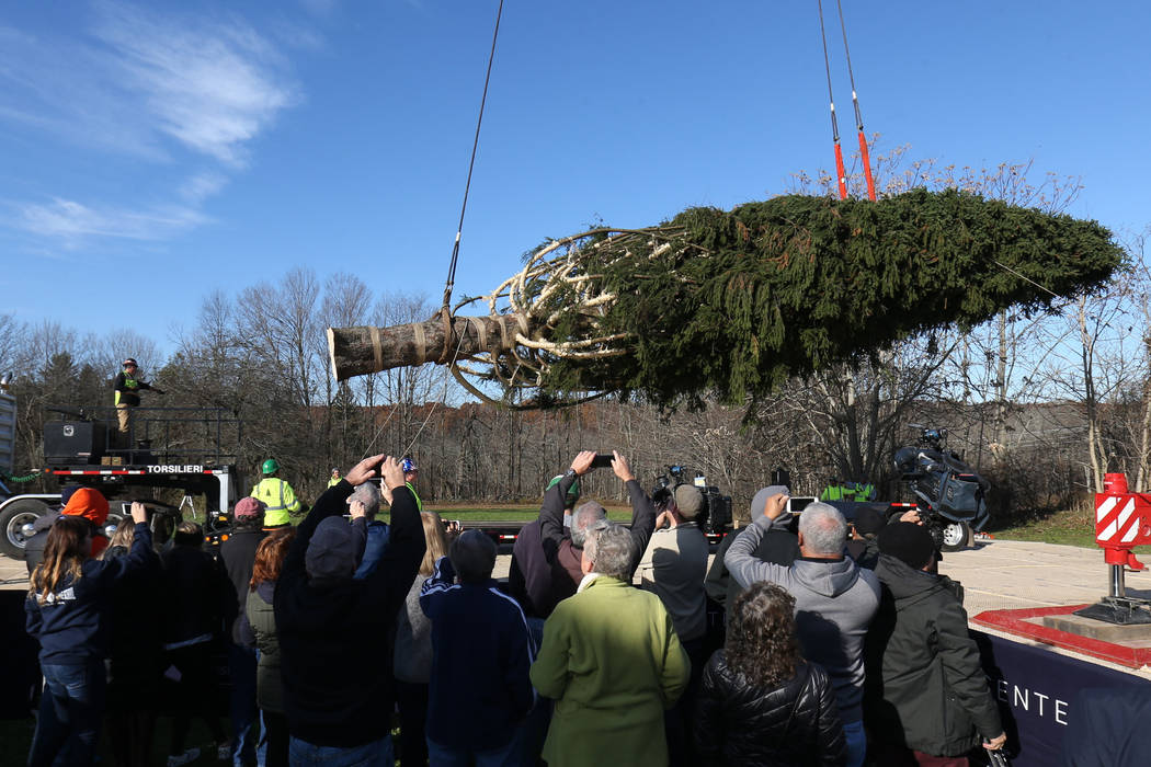 The Rockefeller Center Christmas tree is hoisted by crane to a flatbed truck, Thursday, Nov. 5, 2018 in Wallkill, N.Y. It will be transported to Manhattan where it will be erected at Rockefeller C ...