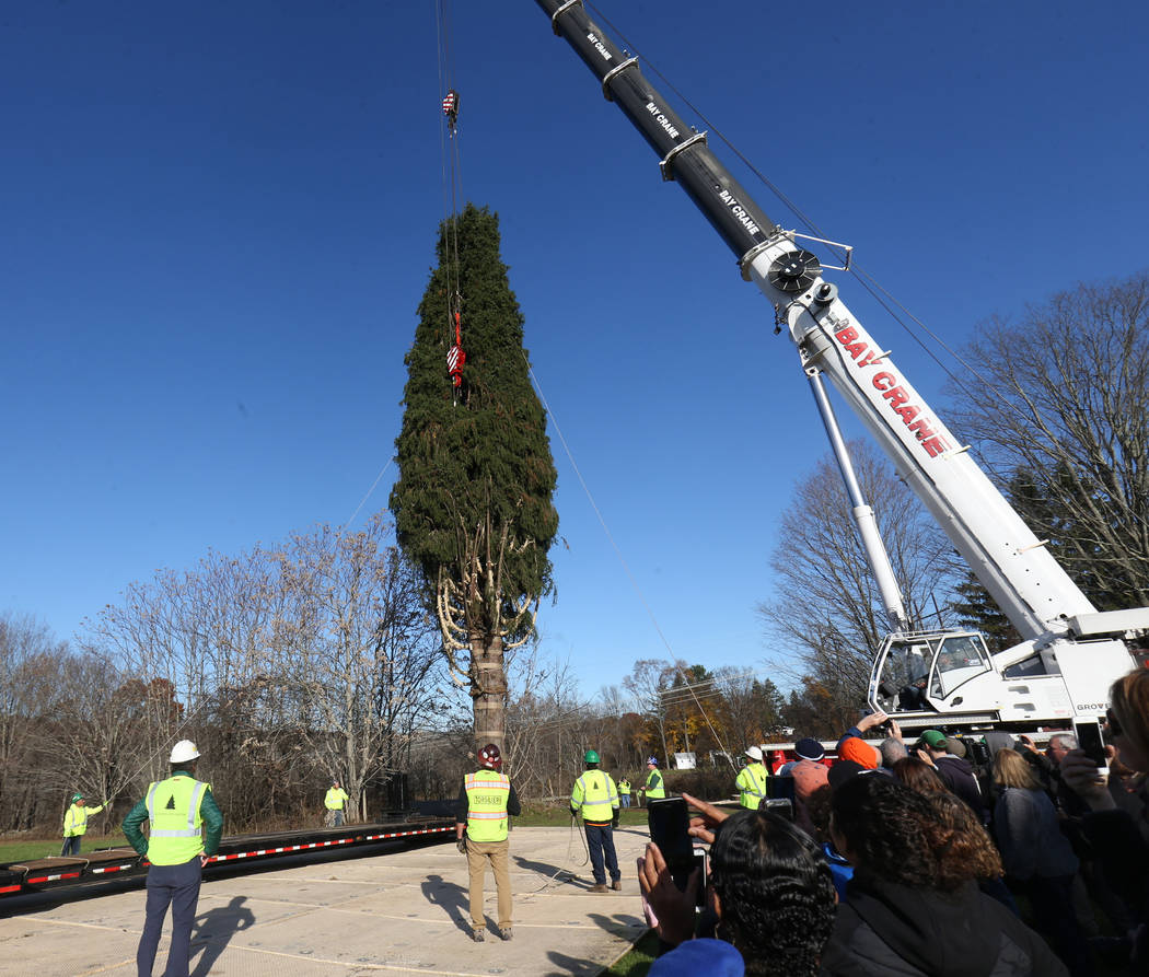 The Rockefeller Center Christmas tree is hoisted by crane to a flatbed truck, Thursday, Nov. 5, 2018 in Wallkill, N.Y. It will be transported to Manhattan where it will be erected this weekend. Th ...