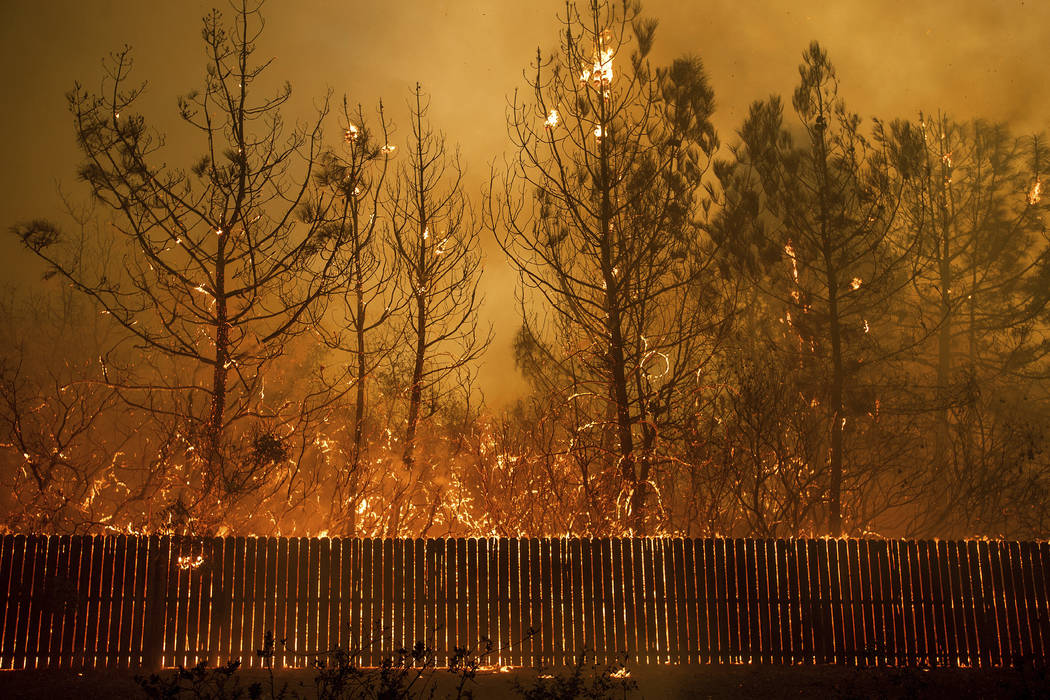 Flames climb trees as the Camp Fire tears through Paradise, Calif., on Thursday, Nov. 8, 2018. Tens of thousands of people fled a fast-moving wildfire Thursday in Northern California, some clutchi ...