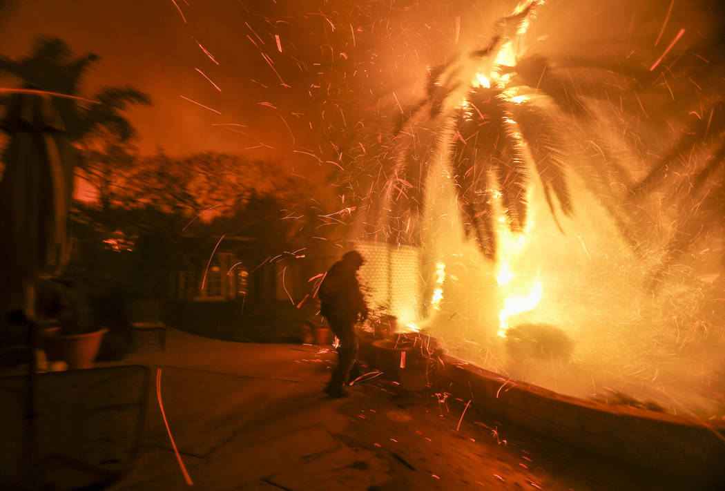 Tim Billow, 62, tries to save his plantings in his backyard as the Woolsey Fire burns in Malibu, Calif., Friday, Nov. 9, 2018. A Southern California wildfire continues to burn homes as it runs tow ...