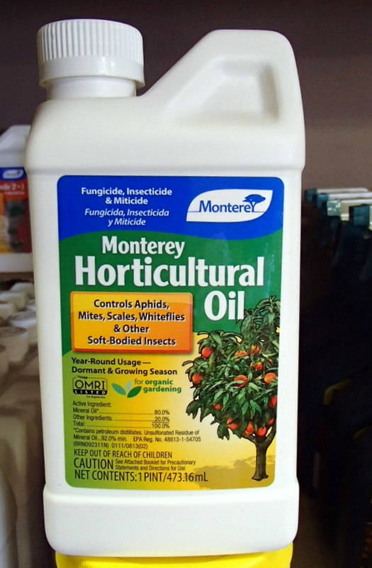 """Applications of oils during the winter reduce the need for """"hard pesticides"""" later. (Bob Morris)"""