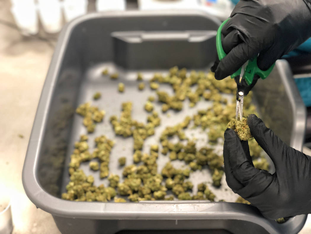 Flower State's cultivation facility on Westwood Dr. in Las Vegas on Tuesday, Nov. 13, 2018. Todd Prince/Las Vegas Review-Journal