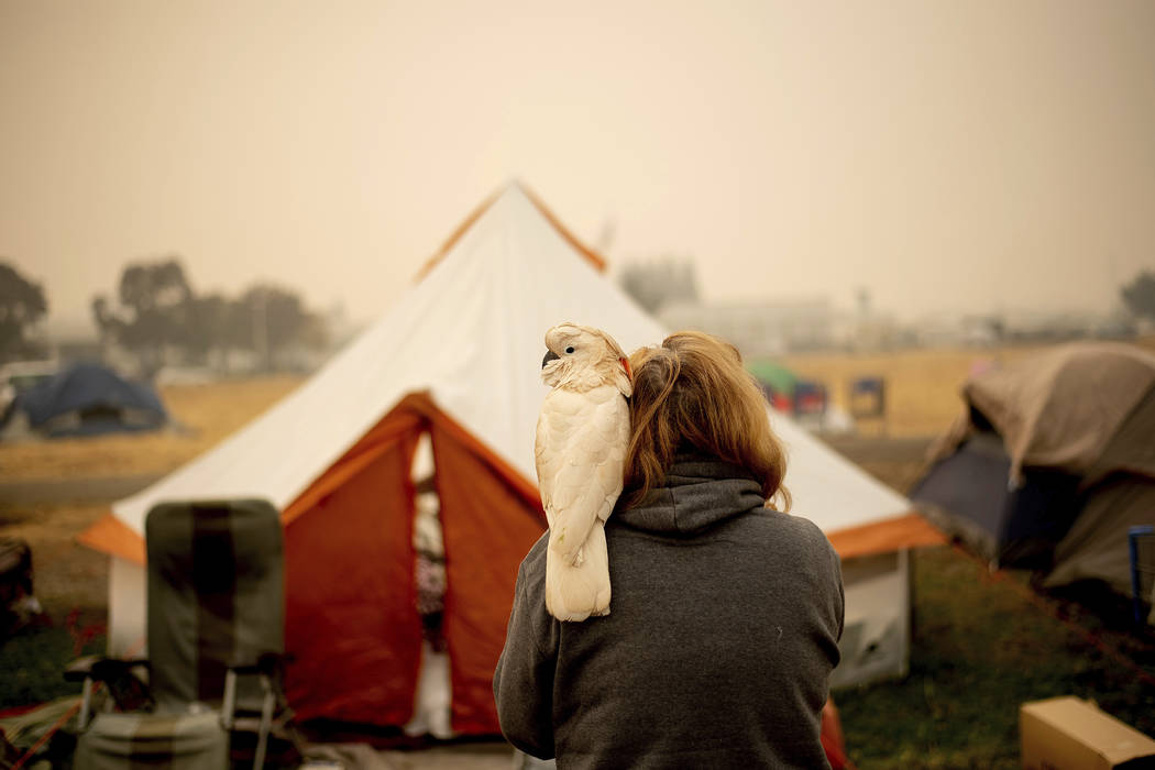 Suzanne Kaksonen, an evacuee of the Camp Fire, and her cockatoo Buddy camp at a makeshift shelter outside a Walmart store in Chico, Calif., on Wednesday, Nov. 14, 2018. Kaksonen lost her Paradise ...