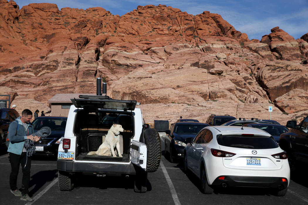 Guy Pinjuv of Blue Diamond prepares to go rock climbing with his Siberian husky Neve at Calico I parking area on the Scenic Loop in Red Rock Canyon Nation Conservation Area Tuesday, Nov. 20, 2018. ...