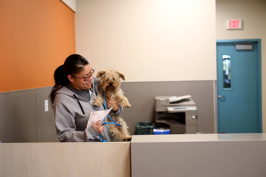 Admissions Counselor Maria Salazar brings a lost dog to the back to be cared for at the Lost & Found lobby at The Animal Foundation in Las Vegas, Tuesday, Nov. 27, 2018. The Animal Foundation ...