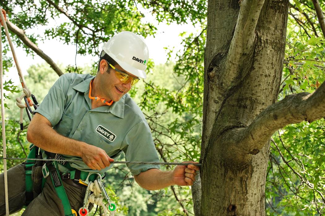 Before winter, have a local arborist examine your trees for weak limbs and fortify them with cables. Cabling helps trees better withstand high winds, ice so they're less likely to break. (Garden ...