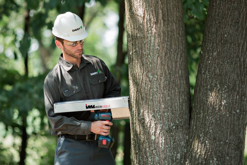 Save your trees stress with prep. An arborist can inspect for destructive insects. (Garden Media Group)