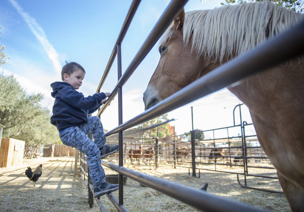 Callen Phillips, 4, from Grand Junction, Colo., looks at one of the horses at The Farm in Las Vegas, Sunday, Nov. 25, 2018. Caroline Brehman/Las Vegas Review-Journal