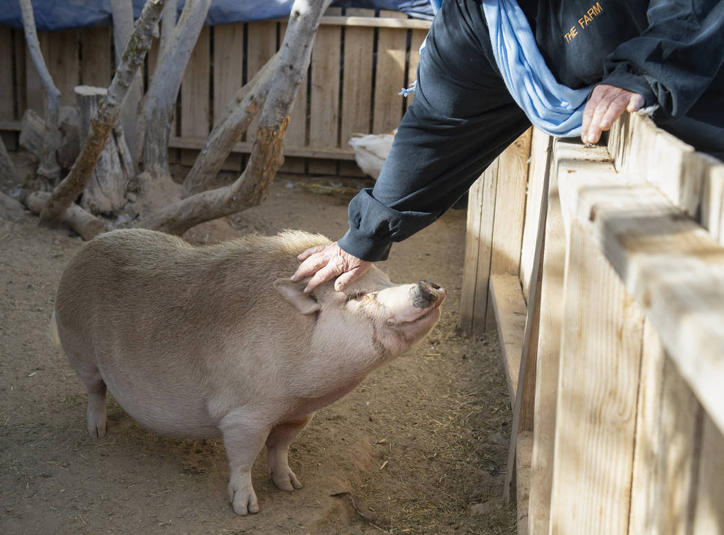 Sharon Linsenbardt, owner of Barn Buddies Rescue, pets one of the pigs at The Farm in Las Vegas, Sunday, Nov. 25, 2018. Caroline Brehman/Las Vegas Review-Journal