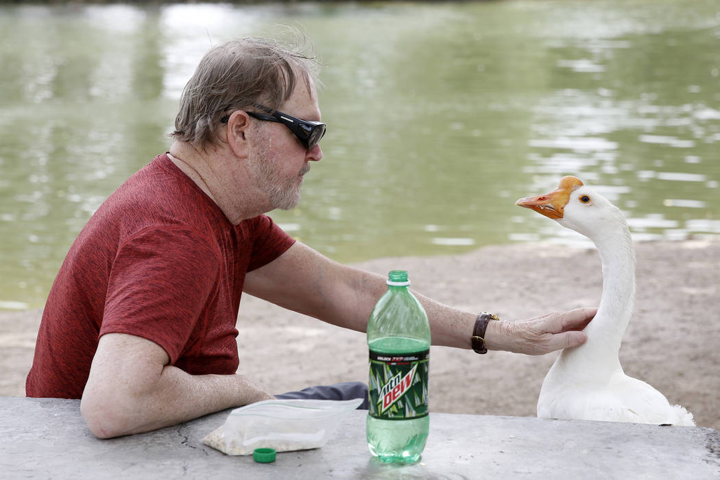 Gary DeVaney and a Chinese goose relax at Floyd Lamb Park at Tule Springs, Thursday, June 8, 2017, in Las Vegas. Bizuayehu Tesfaye/Las Vegas Review-Journal @bizutesfaye