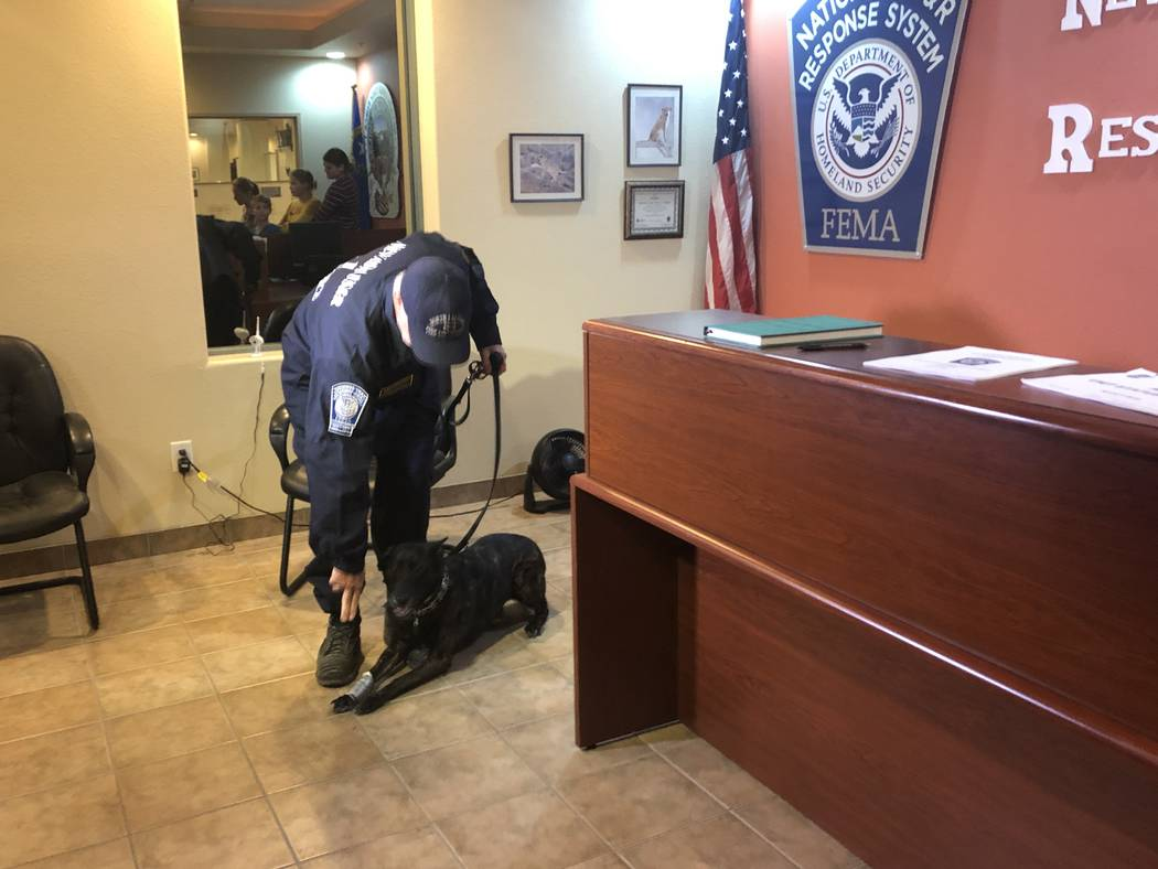 Kya, a Belgian Malinois, sits at the feet of her handler, John Bernstein, at the Nevada Task 1 headquarters on Thursday, November 29, 2018. Kya was one of four dogs trained in human remains detect ...