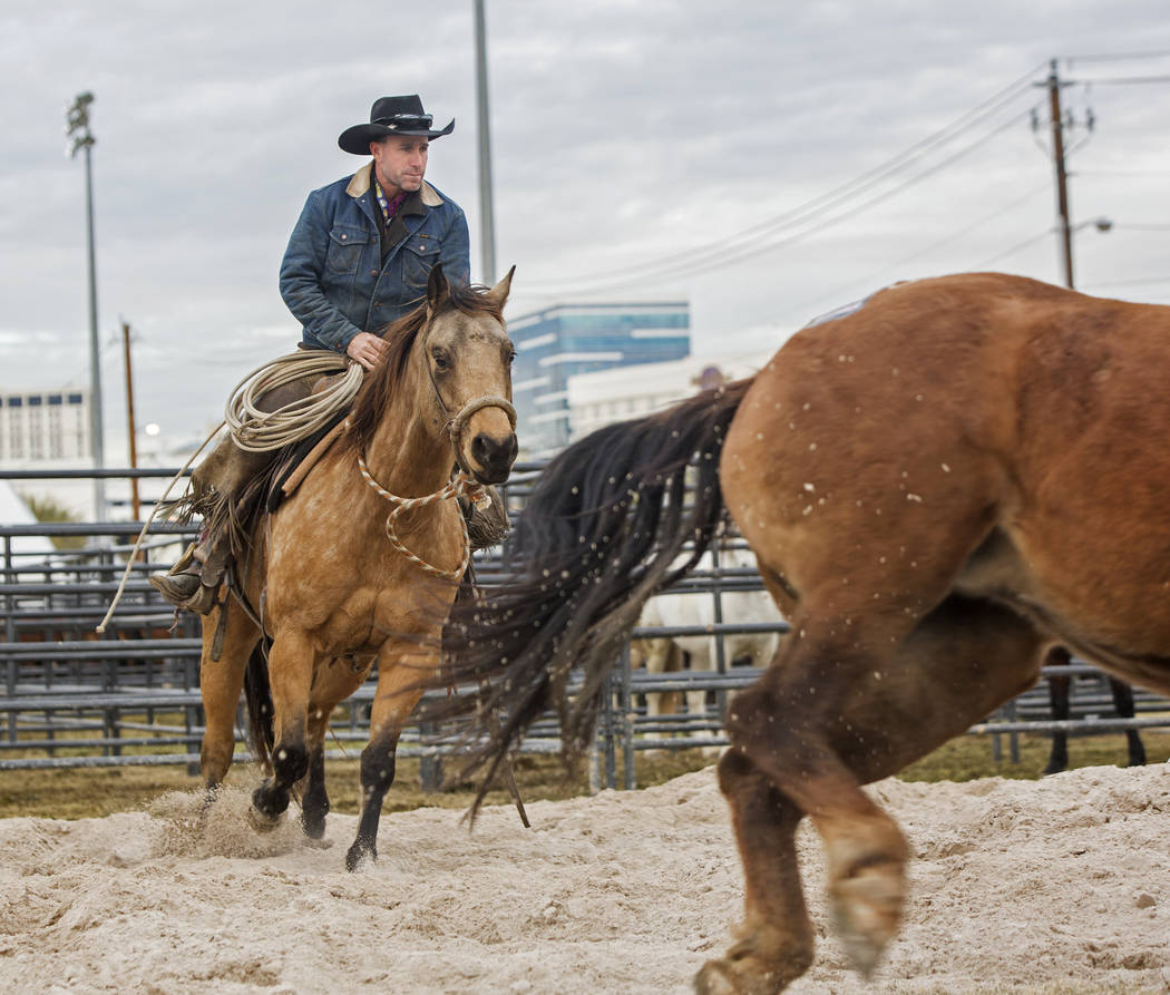 Clint Potts, from Sand Springs, Mont., exercises saddle horses on Tuesday, Dec. 4, 2018, at the UNLV Intramural Field, in Las Vegas. Benjamin Hager Las Vegas Review-Journal