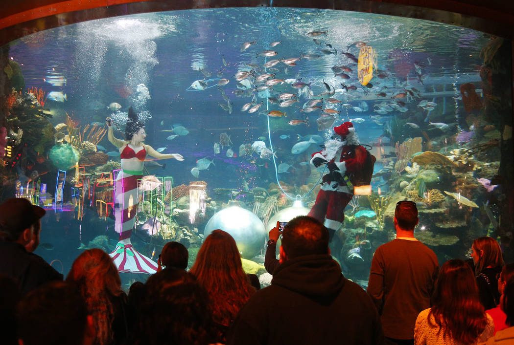 Underwater Santa and the Christmas mermaid greet the crowd at Silverton hotel and casino in Las Vegas, Sunday, Dec. 2, 2018. They are in the aquarium every Saturday and Sunday in December from 12 ...