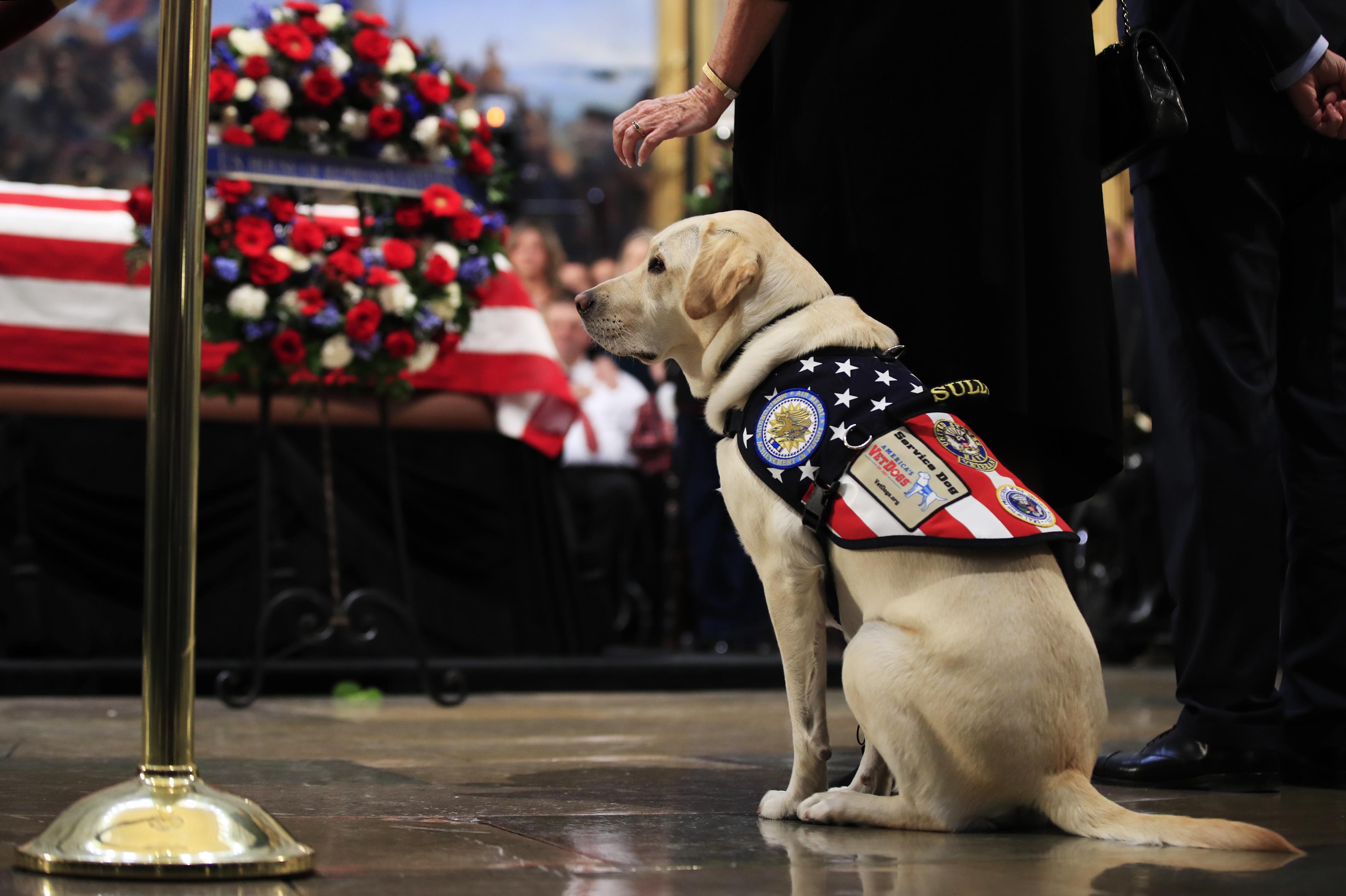 Sully The Service Dog Visits Bush S Casket At Capitol