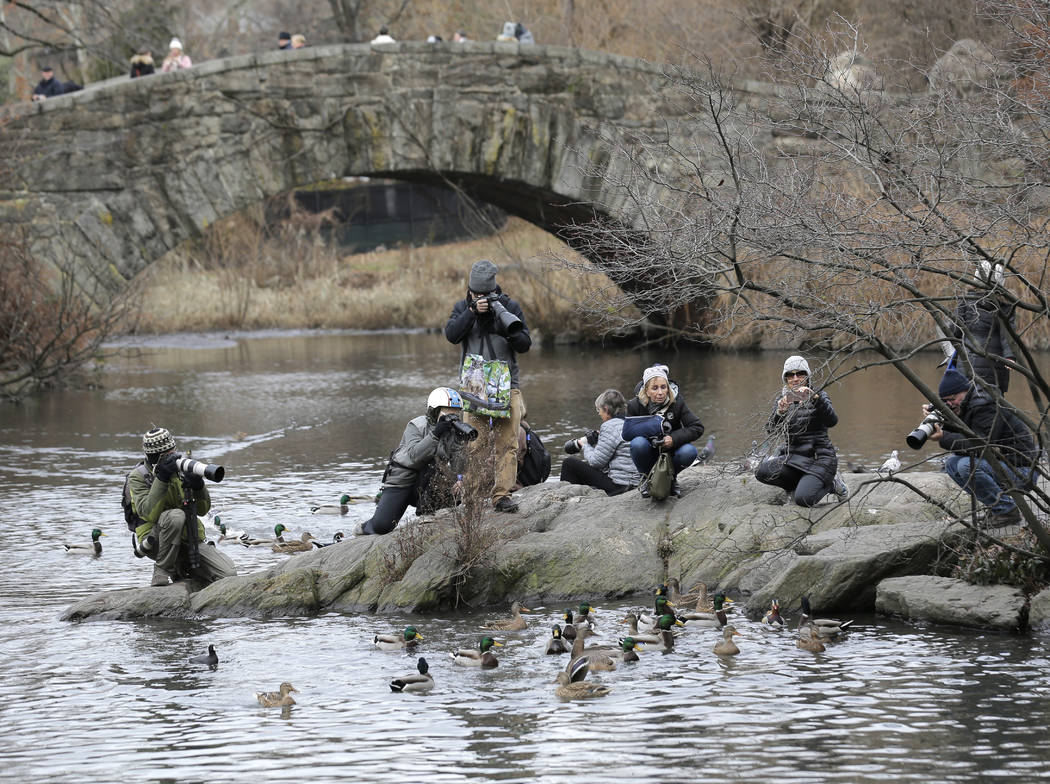 People try to get a look at and pictures of a Mandarin duck in Central Park in New York, Wednesday, Dec. 5, 2018. In the weeks since it appeared in Central Park, the duck has become a celebrity. ( ...